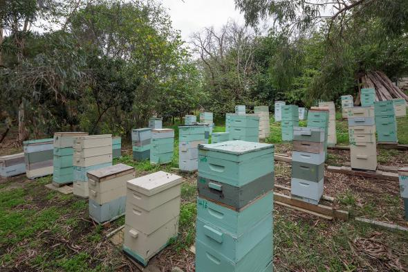 Heide Bee Hives 2015, Photograph: Jeremy Weihrauch