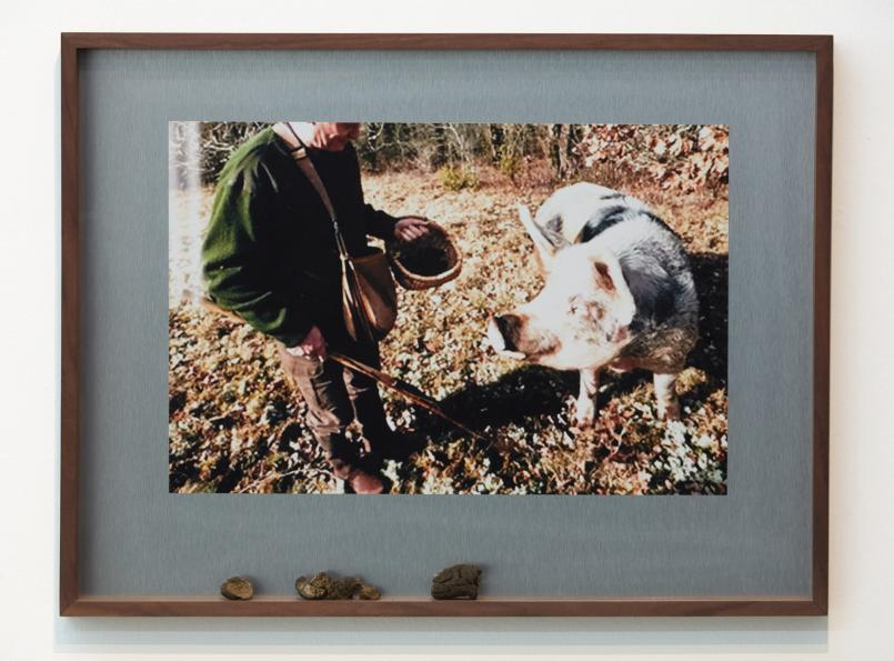 George Egerton-Warburton, Truffle hunting (cortical) 2017, digital print, dibond, dog poo, artist frame, 3.8 x 47.6 x 62.9 cm, Courtesy of the artist and Sutton Gallery, Melbourne
