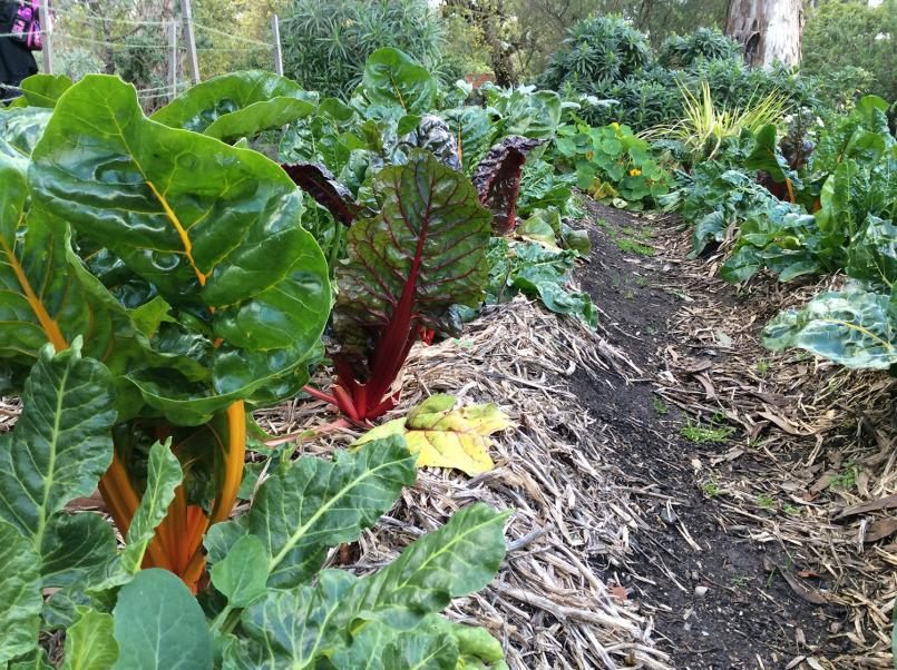 Heide I Kitchen Garden vegetables 2015